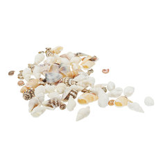40Pcs/Lot 0.3-1.6 cm Small Miscellaneous Conch Home Decoration Material Natural Craft Seashell