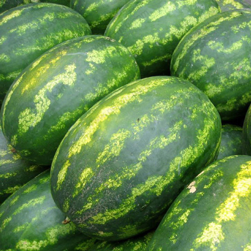 Egrow 30Pcs Giant Watermelon Seeds Black Tyrant King Super Sweet Watermelon Seeds Garden Fruit