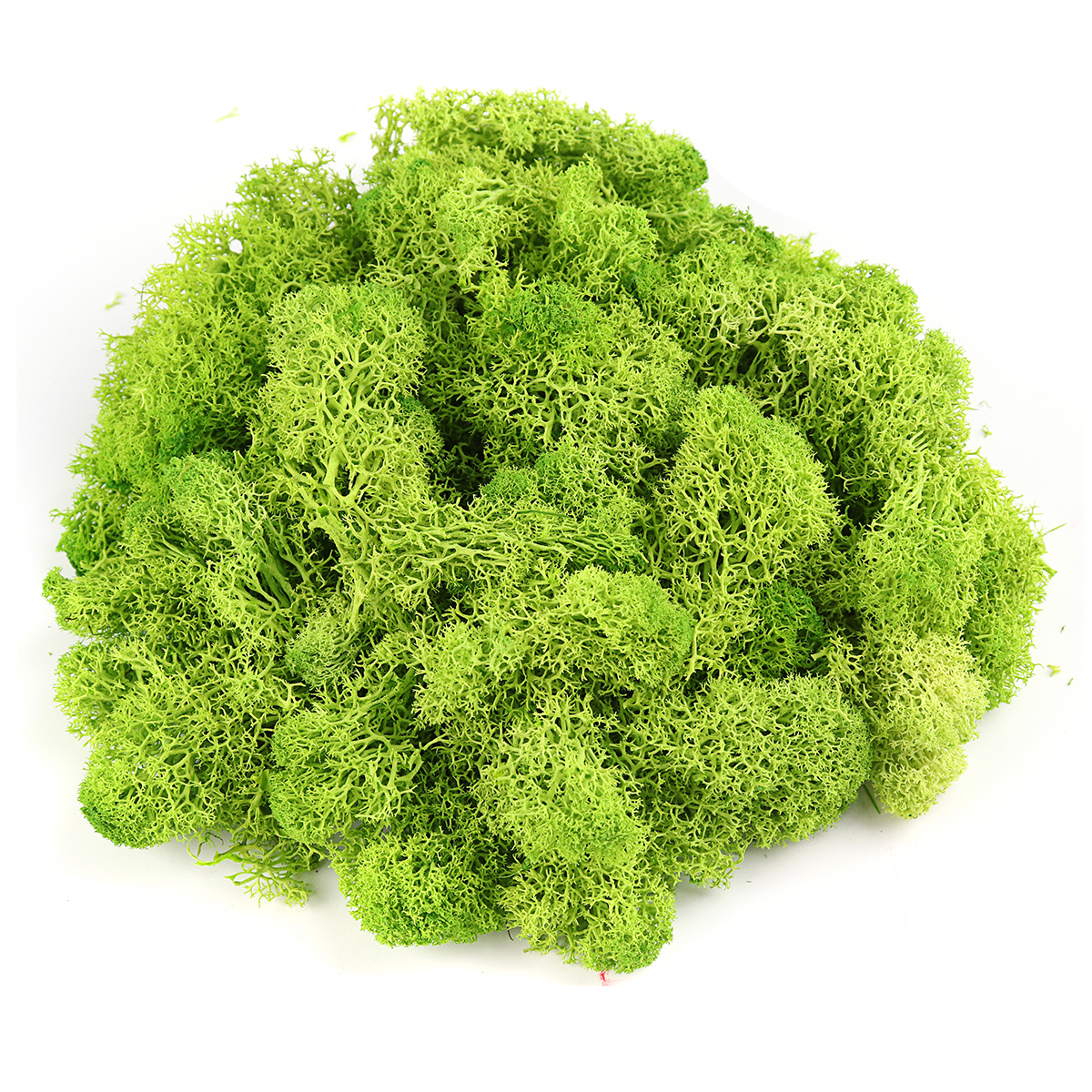 200g Natural Norwegian Reindeer Moss Preserved Dried Craft Flower Decorations
