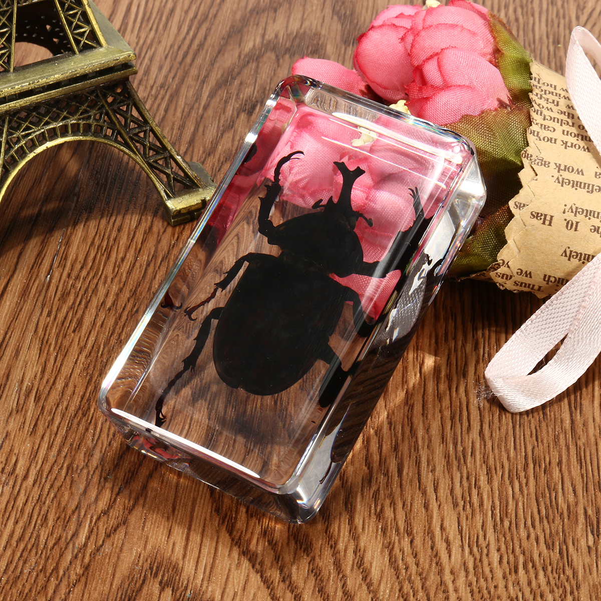 Clear Acrylic Lucite Insect Specimen Spider Black Longhorn Beetle Scorpions Craft Science Toy