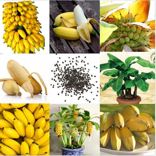 Egrow 30 Pcs Dwarf Banana Seeds Bonsai Tree Tropical Fruit Seeds Balcony Flower for Home Plants