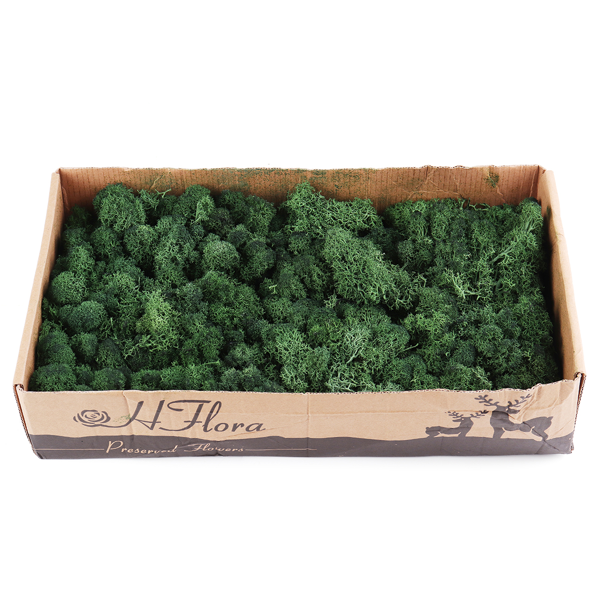 500g Natural Norwegian Reindeer Moss Preserved Dried Craft Preservation Flower Fairy Decorations DIY