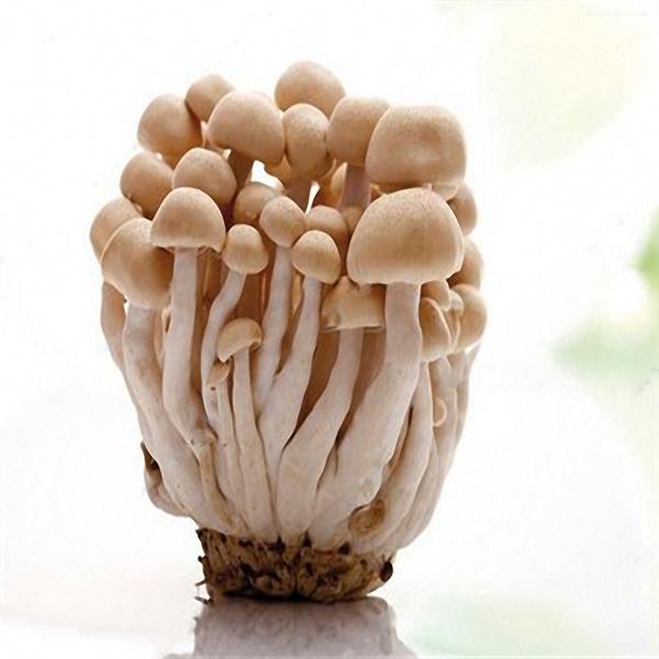 Egrow 50 Pcs/Pack Edible Health Mushrooom Seeds Orangic Vegetable Plants Seeds