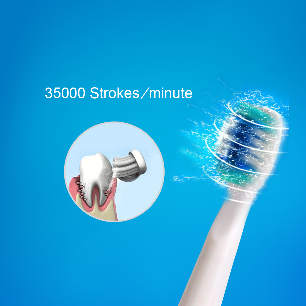 SEAGO E1 Sonic Electric Toothbrush 2 Brushing Modes Battery Operation IPX7 Waterproof with 3 Toothbrush Head
