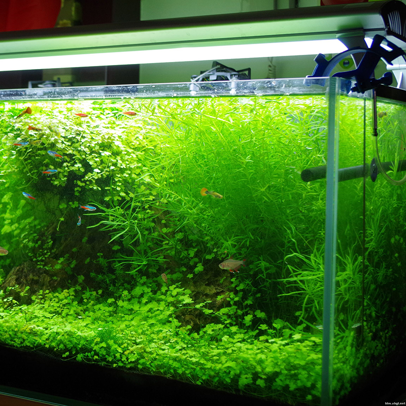 Egrow 1000Pcs/Bag Aquarium Plants Seeds Artificial Aquarium Plant Decoration Fish Tank Submersible