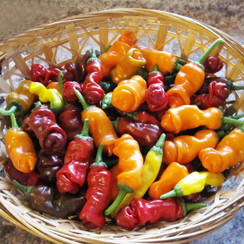 Egrow 100Pcs/Pack Chili Seeds Red Green Yellow Peppers Funny Kitchen Seasoners Plants Seeds