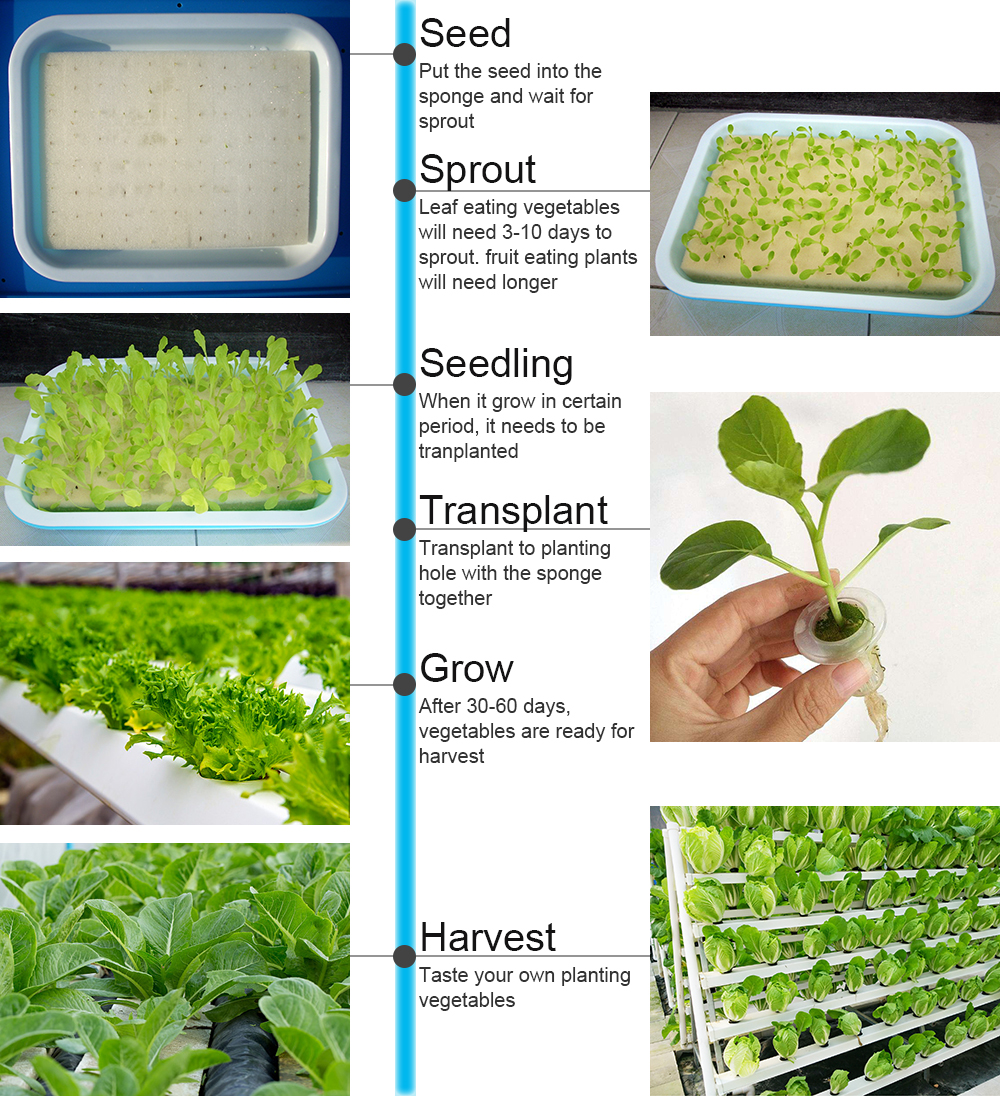 2 Layer 36 Sites Hydroponic Grow Kit Ebb Flow Deep Water Culture Growing DWC Planting Garden Vegetable System