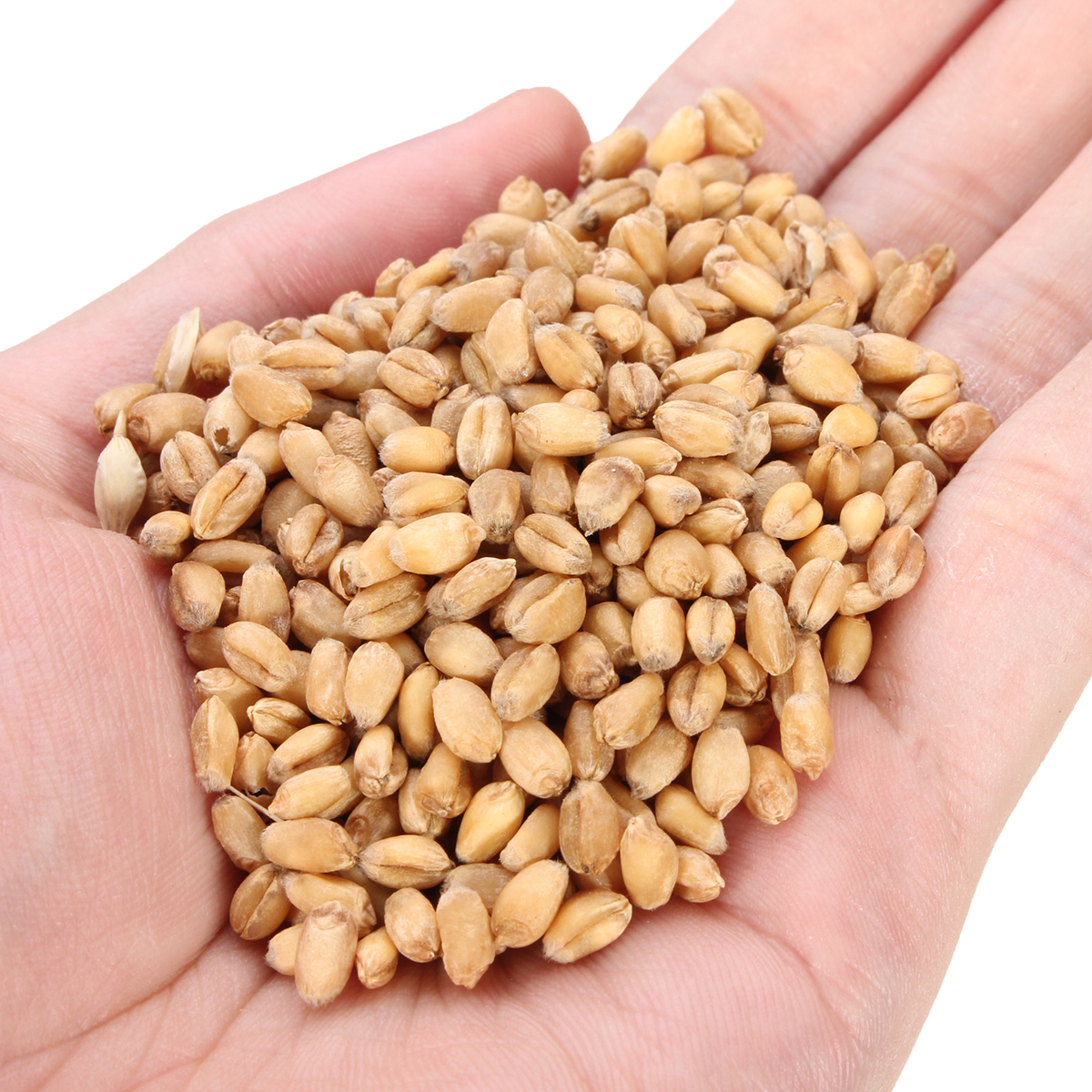 90g Pure Natural Grown Sweet Oat Grass Seeds Cat Dog Rabbit Pet Health Food 90g Pure Natural Grown