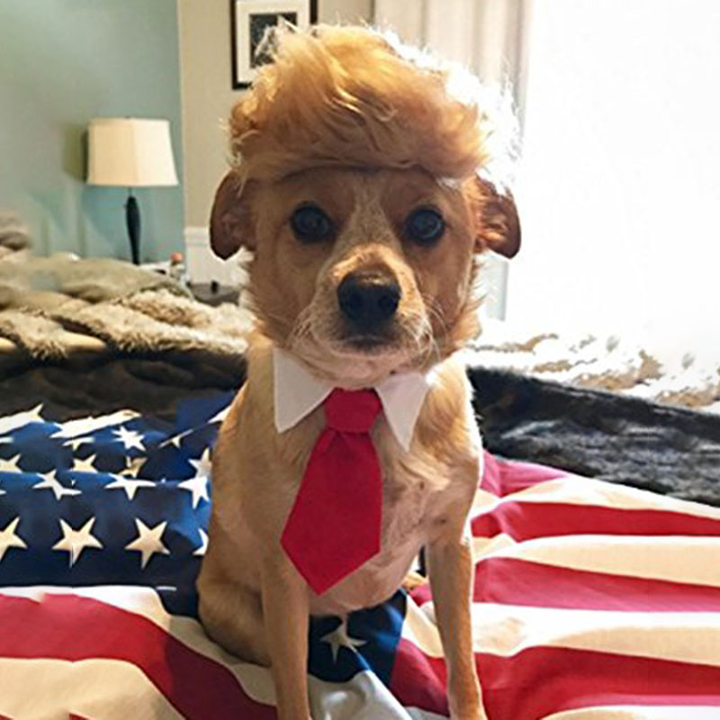 Pet Dog Cat Trump Style Cat Wig Pet hair Costume Head Wear Apparel Toy for Christmas Parties