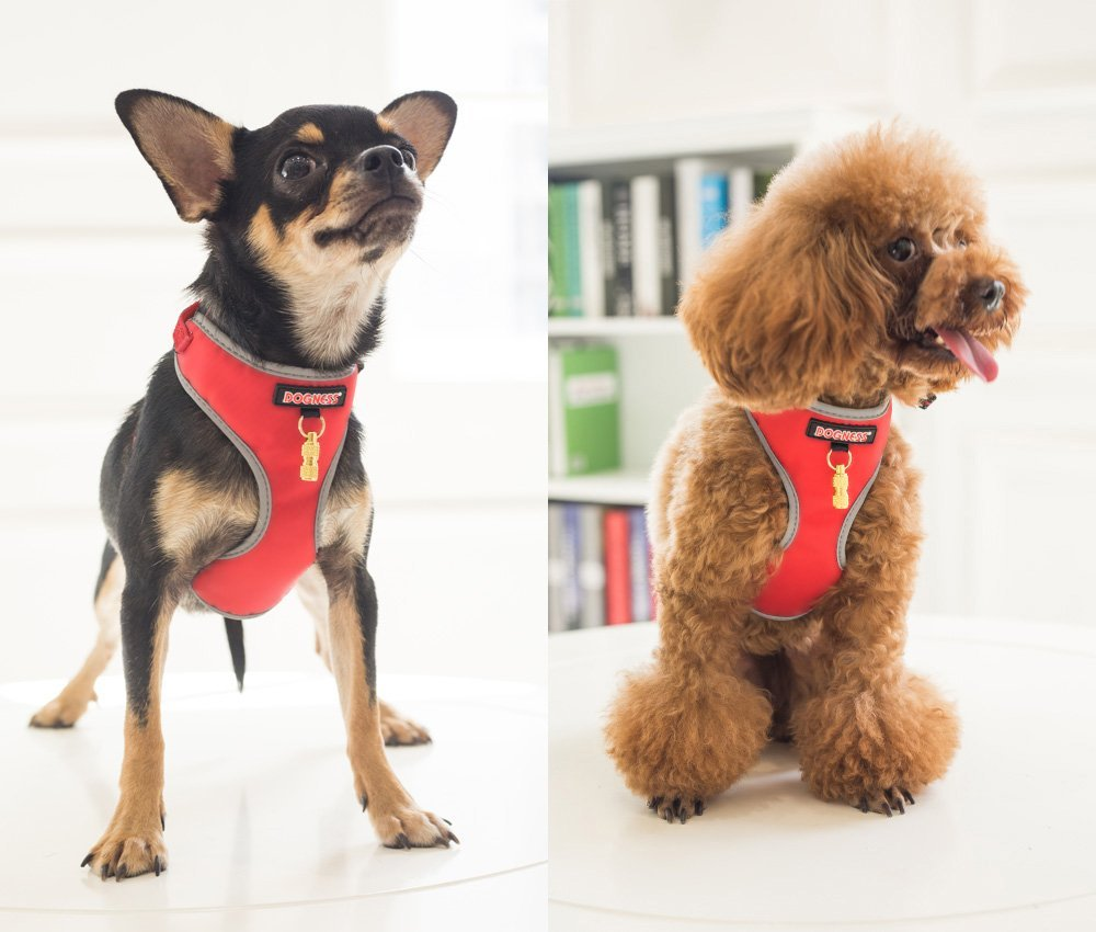 Small Dog Vest Harness & Leash Set Dog Collar Luxurious Breathable Soft Comfy Mesh Padding