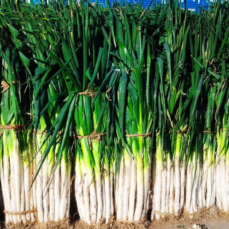 Egrow 100Pcs/Bag Green Scallion Seeds Season Vegetable Seeds Special High-yielding Vegetable Four Seasons Onion Seeds Seasons Giant Shallot Seeds Chives Seasons Onion Plants Health Vegetables Segments