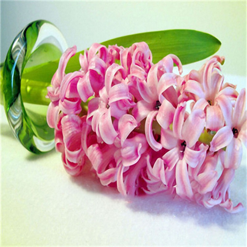 Egrow 100Pcs Hyacinth Flower Seeds Mixed Color Beautifying Garden Bonsai Potted Blooming Plant
