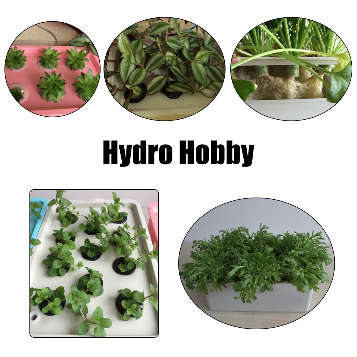 220V Hydroponic System Kit 12 Holes DWC Soilless Cultivation Indoor Water Planting Grow Box