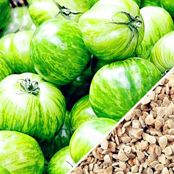 Egrow 100Pcs/Pack Red Green Yellow Tomato Seed Greenhouse Potted Organic Vegetable& Fruit Seeds