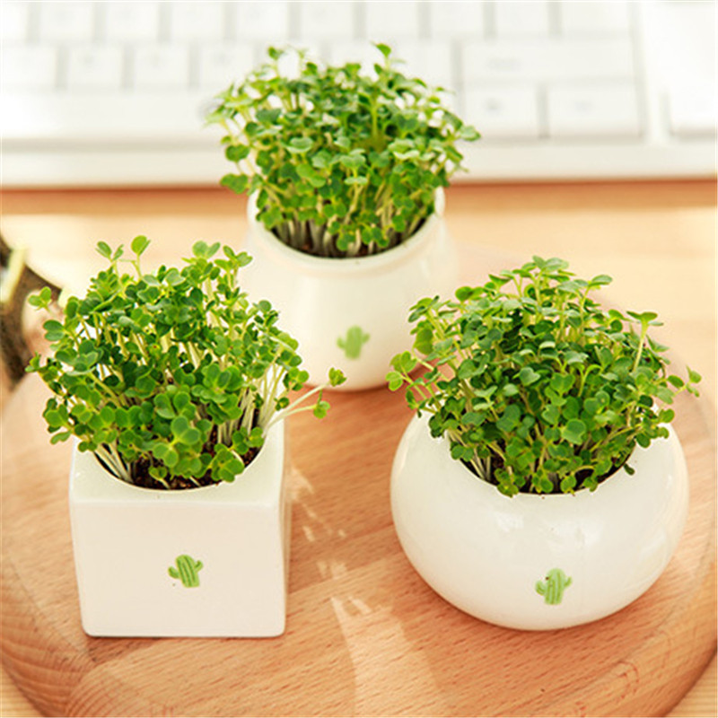 Gardening Mini Ceramic Flower Pot Delicate Vase Circular Bonsai Planter Nursery Seedling pot