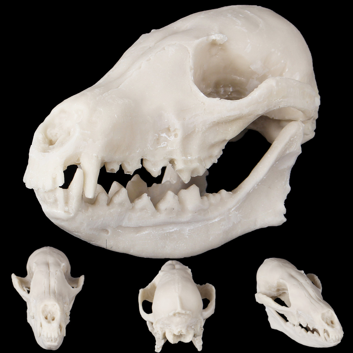 Fox Skull Resin Animal Bone Model Collectibles Crafts Home Room Decorations Christmas Gift