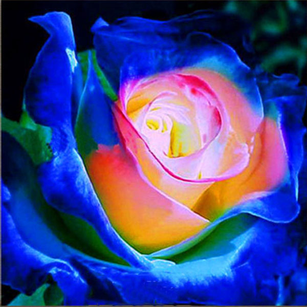 Egrow 100Pca/Pack Blue Purple Rose Seeds Garden Flower Gift Plants Bonsai Seeds