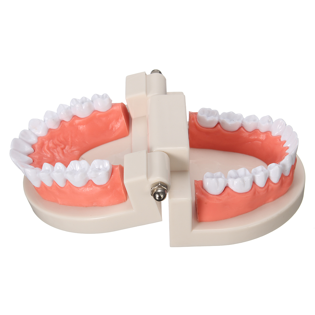 ABS Tooth Model Tooth Veneered Practice Dental Teaching Learning