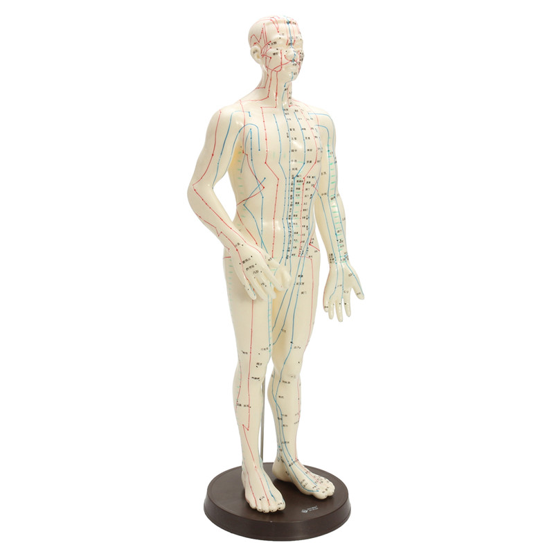 Human Body Acupuncture Medical Model Male Female Meridians Model Chart Book Base 48/50cm
