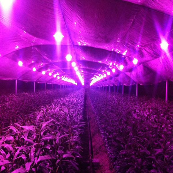 5Pcs/Pack 10W 20W 30W LED Cob Indoor Garden Plant Grow Light Chip DIY Full Spectrum Growth Lamp