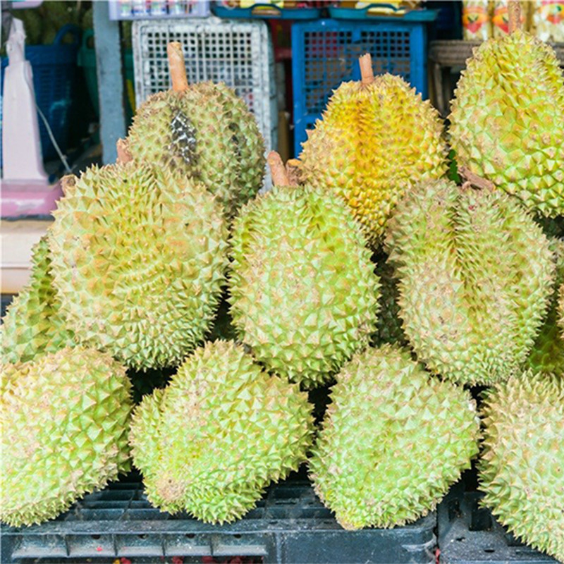 Egrow 5Pcs/Bag Durian Tree Seeds Delicious King Of Fruit Seeds High-nutrition Giant Outdoor Rare Plants Funny Bonsai Seeds for Home Garden