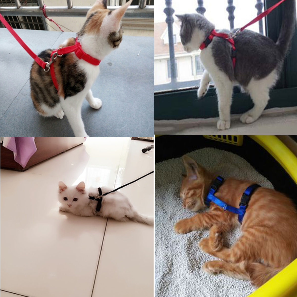 Pet Cat Kitten Adjustable Harness Nylon Collar Belt Lead Leash