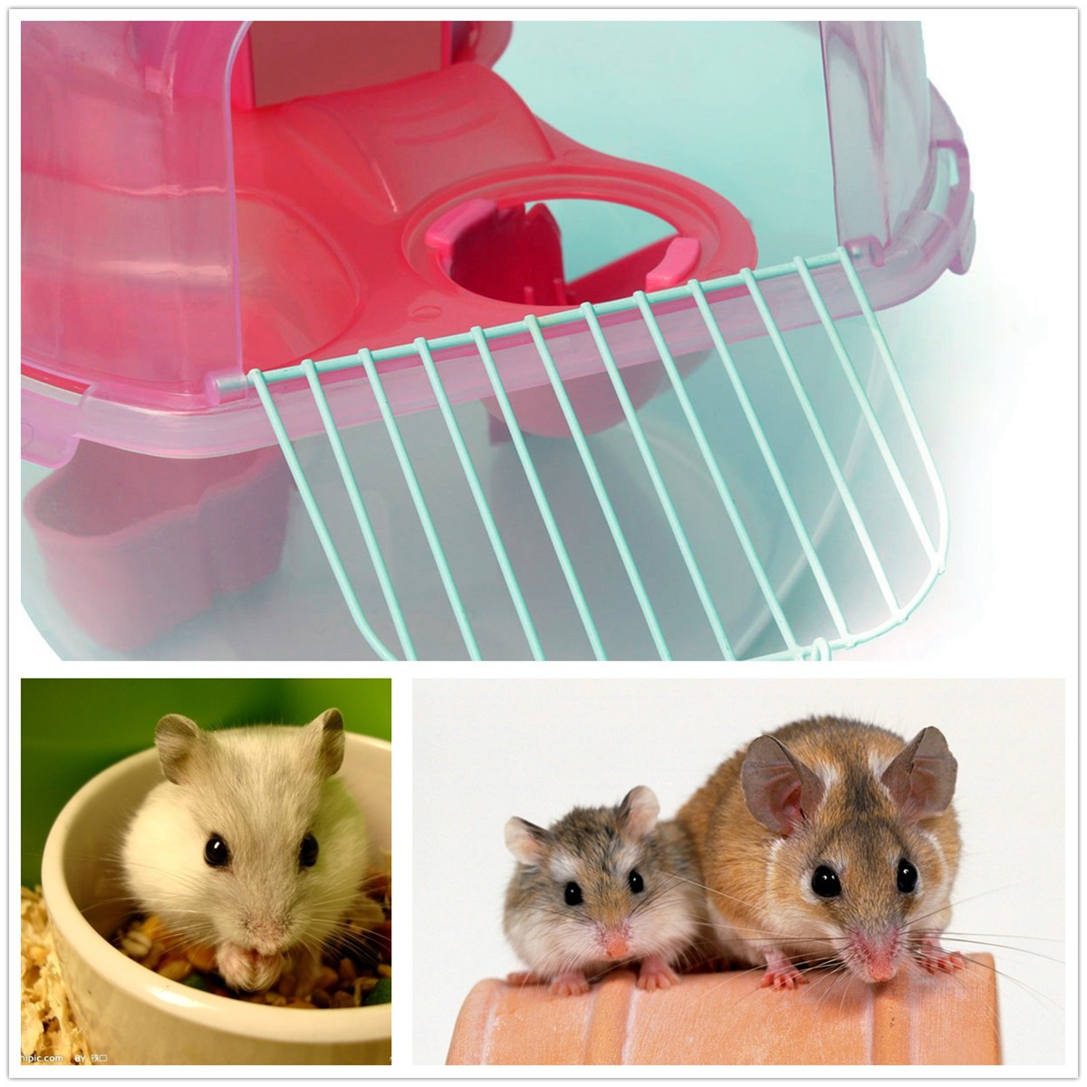Pet Hamster House Multiunit Plastic House Cage With Exercise Wheel Mouse Toy For Rat Hamster House