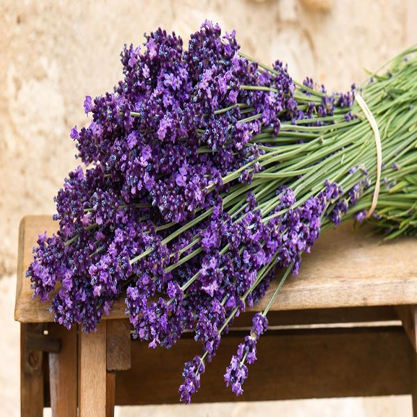 30Pcs Lavender Seeds Garden Foliage Plants Mini Potted Plants Seeds