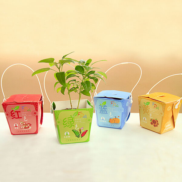 Creative Mini Gift Box Shape Potted Office Hydroponic Plant Desktop
