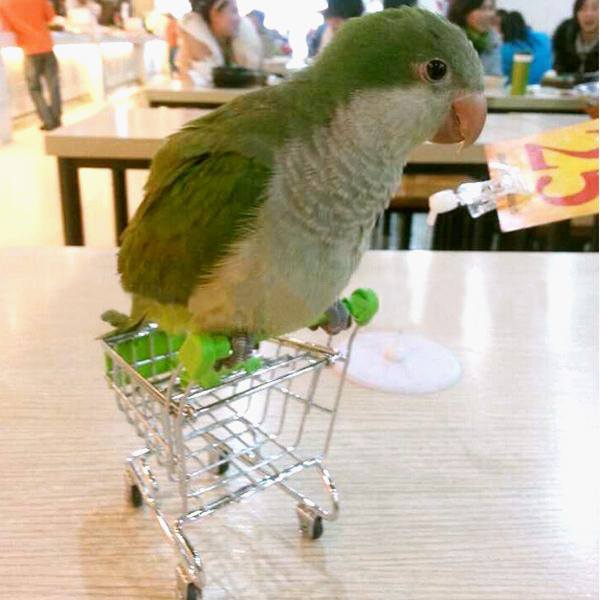 Parrot Toy Bird Supermarket Shopping Cart Kids Growth Box