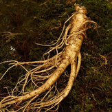 Original Egrow 50Pcs/Pack Ginseng Seeds Garden Potted Edible Herbal Plants Seeds