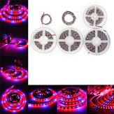 0.5M/1M/2M/3M/4M/5M SMD5050 Red:Blue 3:1 Full Spectrum LED Grow Strip Light Plant Lamp