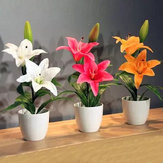 Original Egrow 100 piezas / paquete White Red Lily Flower Semillas Home Garden plantas en maceta Bonsai Semillas