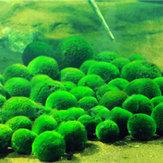 Egrow 1000 قطع حوض للأسماك العشب بذور النباتات المائية المائية الزينة العشب العشب