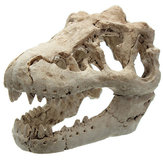 Dragon Resin Aquarium Decoration Crocodile Skull For Fish Tank Resin Ornament