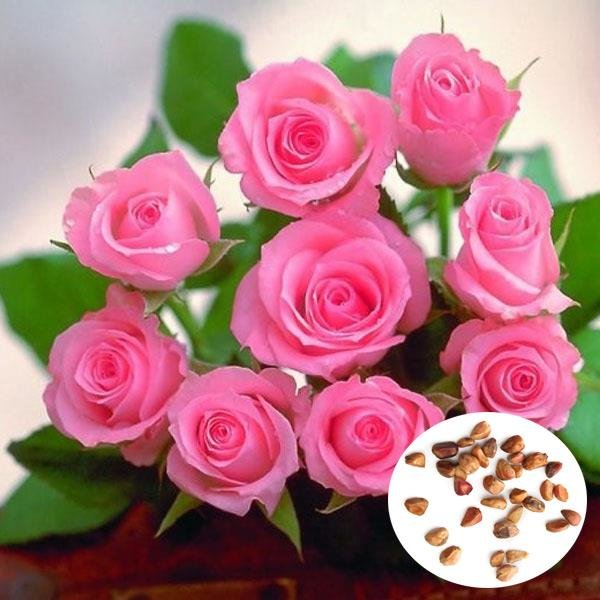 20 Pcs Pink Rose Flower Seeds Romantic Flower Seeds Us136 Sold Out