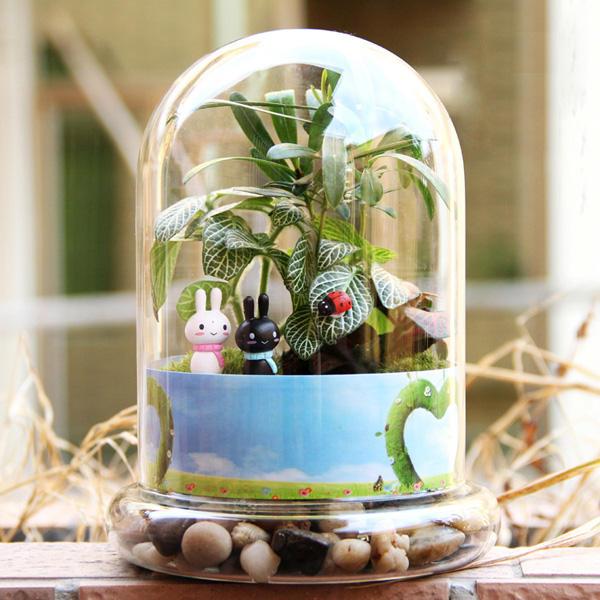 Piante Grasse In Vetro.Cilindro A Forma Di Fai Da Te Muschio Micro Paesaggio Bottiglia Di