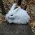 15cm Mini Realistic Cute White Plush Rabbits Fur Lifelike Animal Furry Easter Bunny Stuffed Plush Toy