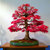 Egrow 50PCS/Pack Maple Seeds Canada Mini Red Maple Bonsai Garden DIY Bonsai Maple Tree Plant
