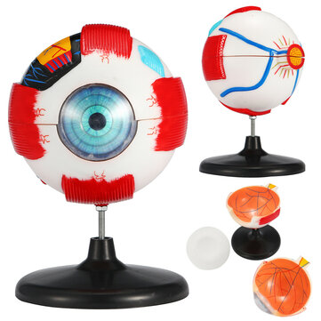 Large Sized Removable Human Eye Eyeball Medical Model Anatomy Study Lab Teaching Education Equipment