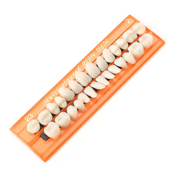 Dental Acrylic Resin Teeth 28 Units Denture Oral Cavity Science Dentist Student Practice Tool