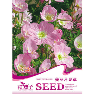 30pcs Showy Pink Evening Primrose Oenothera Odorata Flower Seeds
