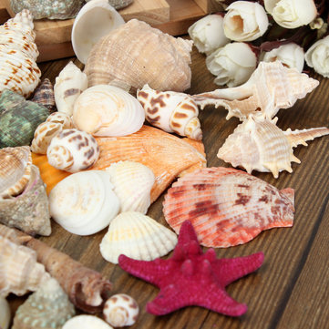1 Set Mixed Mediterranean Style Starfish Shells Sea Shells Beach Sea Shellss Colorful Home Decor Gift