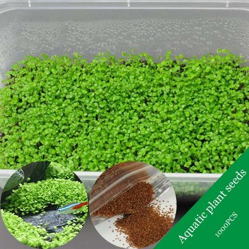 Egrow 1000Pcs/Pack Aquarium Grass Seeds Aquatic Fish Tank Decor Water Plants Seeds