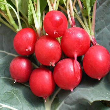 Egrow 50Pcs/Pack Cherry Radish Seeds Green Plants Garden Kitchen Vegetables Seeds