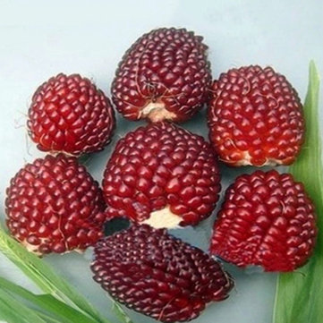 Egrow 500Pcs/Pack Jackfruit Strawberry Seeds Garden Plants Fruit Seeds