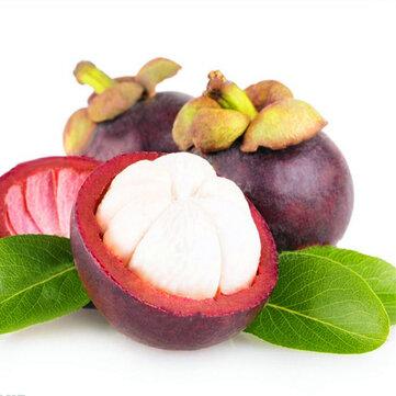 Egrow 50Pcs/Pack Mangosteen Seeds Tropical Sour Sweet Fruit Seeds Garden Plants Tree Bonsai