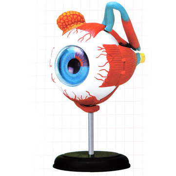 4D MASTER 126mm Eye Model Human Anatomy Medical Model New 3D Structure Of The Eye Puzzle