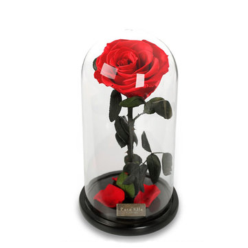 พาราเอลล่าเก็บดอกไม้สดด้วยกลีบดอกไม้ลดลงในแก้ว Dome บนฐานไม้เป็นของขวัญสำหรับคนรักวันวาเล