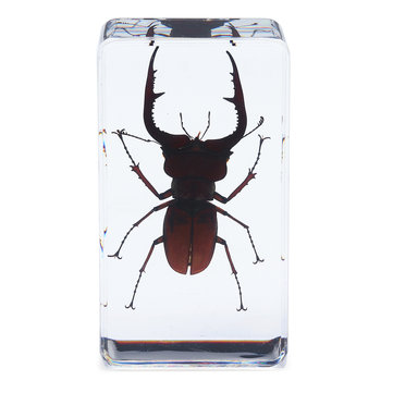 Stag Beetles Insect Amber Specimen Teaching Paperweight Learning Art Room Decorations